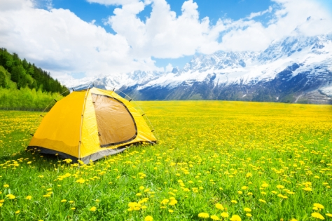 Camping tent in the nice yellow dandelion field with mountains on background