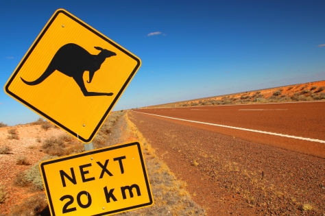 Kangaroos crossing.
