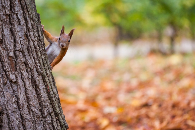 Summer Squirrel: My Allergen-Friendly Winter Meal Preparations